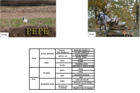 PEPE X RAMENSIS EVA - Αντίγραφο