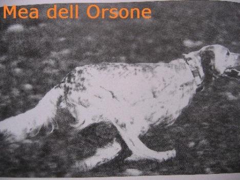 mea-dellorsone